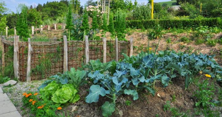 Kurs Gemüseanbau Stift Seitenstetten